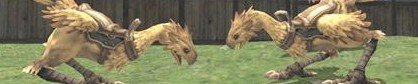 FF XI: L'élevage de Chocobos (éditée)